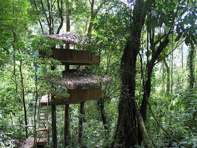 Costa Rican Tree House Community Becomes A Reality