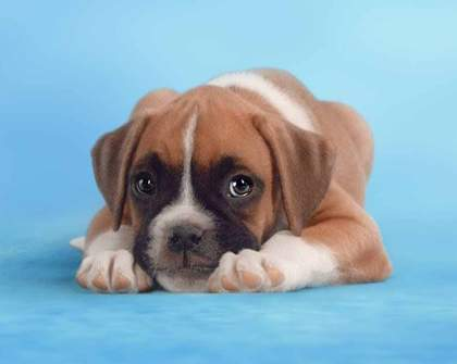 Watch This Cute Puppy Video to Raise Funds for Charity