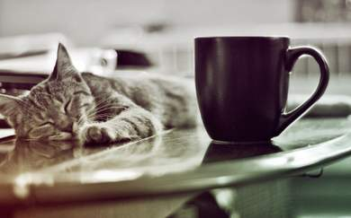 New Zealand, You May Finally Be Getting Your Very Own Cat Cafe