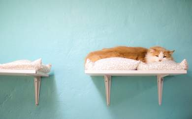 This SydneyCat Cafe Is Doing Cat Yoga