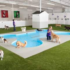 New York's JFK Airport Is Building a Luxury Terminal for Your Pets