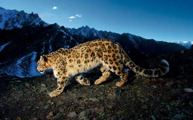 Win a Double Pass to National Geographic Presents My Nine Lives