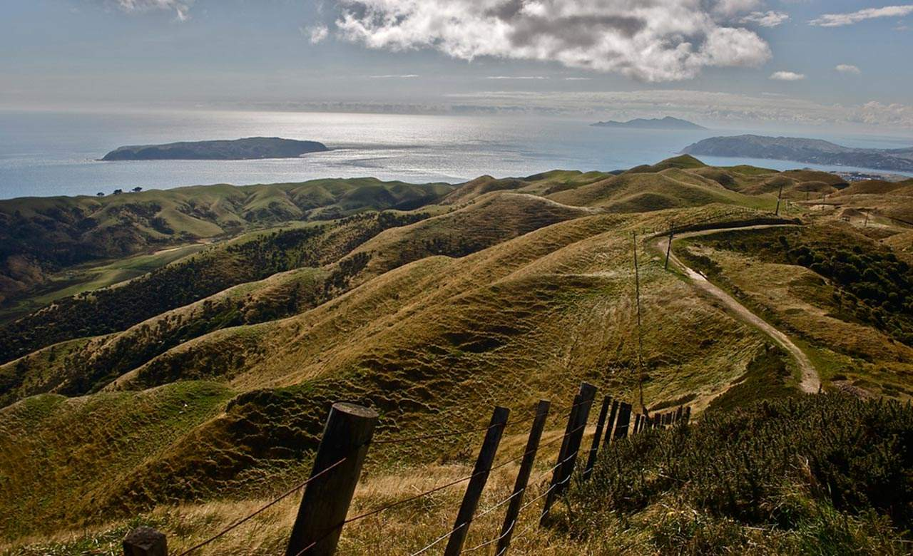 The Ten Best Runs in Wellington