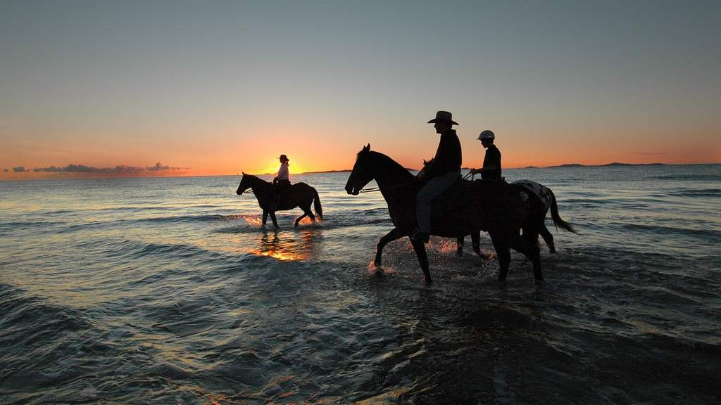 The Five Best Places to Go Horse Riding Near Brisbane