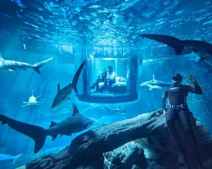 You Can Stay the Night in Shark-Infested Waters Thanks to Airbnb