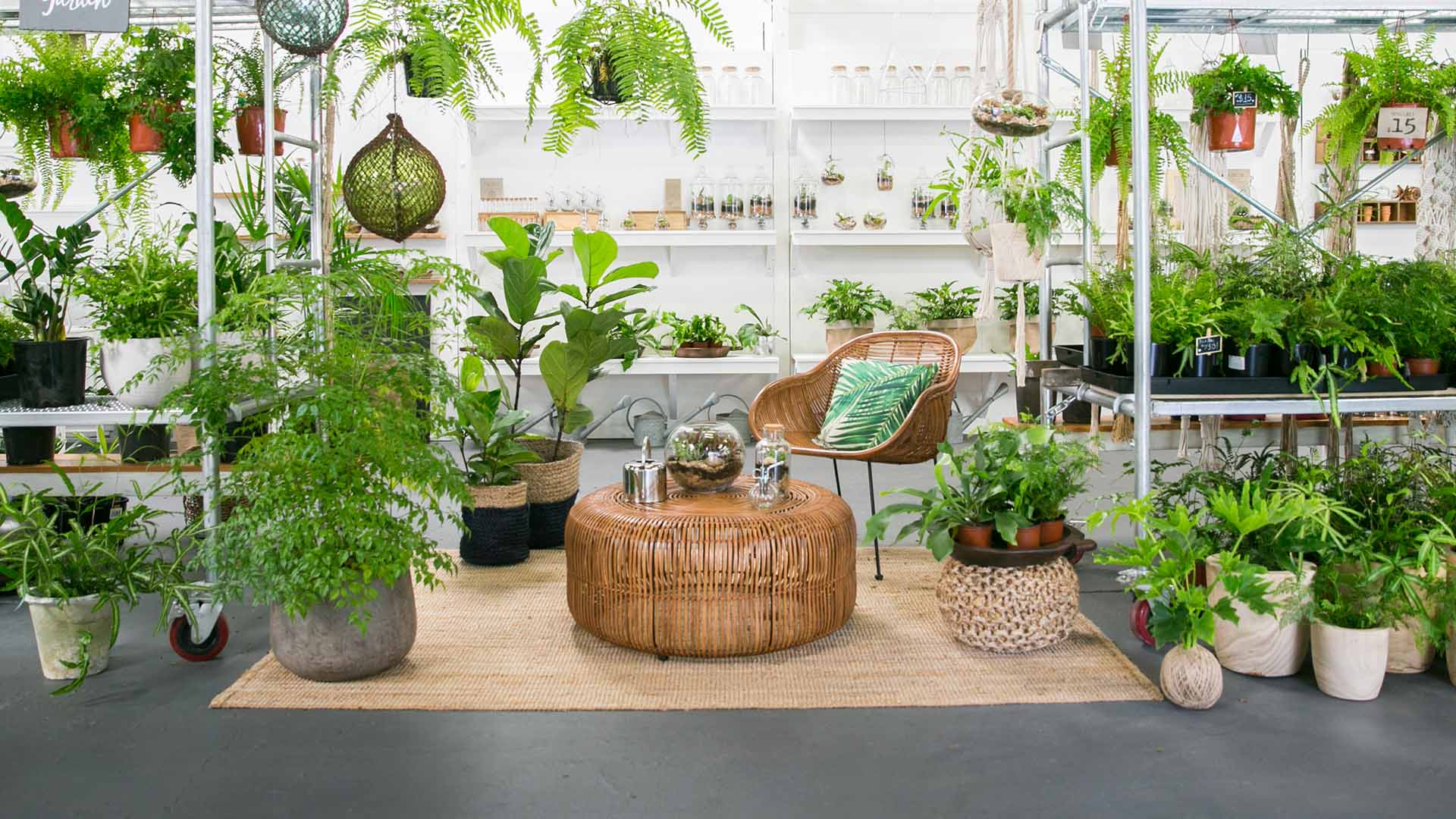 The Best Places To Buy Plants In Brisbane Concrete Playground Brisbane