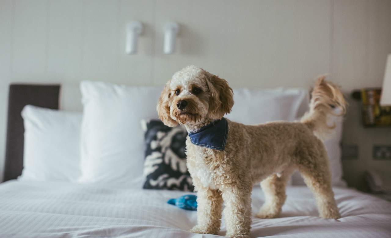 Dog Friendly Beaches Sydney North Shore