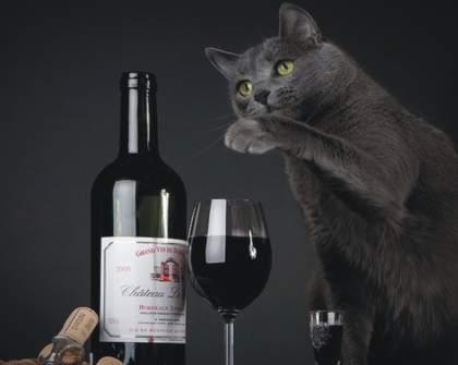 A Colorado Company Has Made Wine For Cats