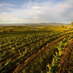 A Weekender's Guide to Healesville and Yarra Valley