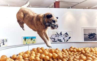 London's Latest Interactive Art Exhibition Is Designed Entirely for Dogs