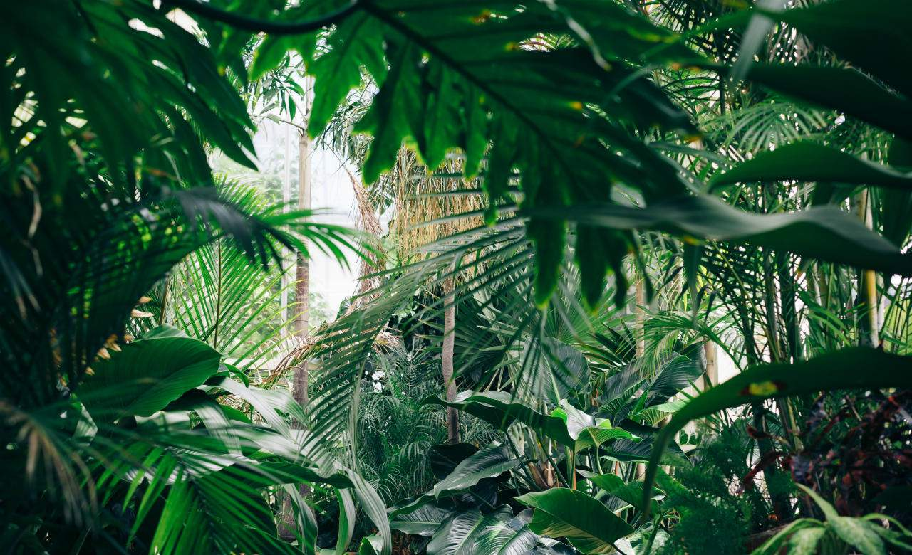 rainforest-pexels