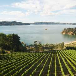 Waiheke Wine and Food Festival
