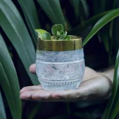 This New Gin Is Made from Botanicals Grown in Sydney's Royal Botanic Garden