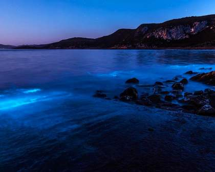 This Australian Beach Has Been Lit Up Bright Blue by 'Sea Sparkle'