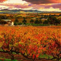 A One-Day Celebration of Barossa Wine and Food Is Coming to Melbourne
