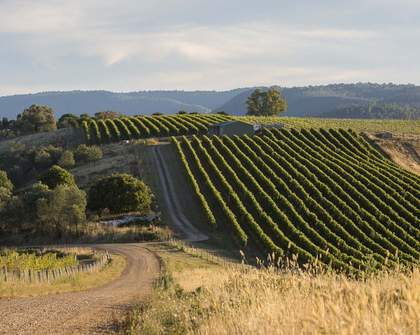 Five Lesser-Known Australian Wine Regions Frequented by Sommeliers