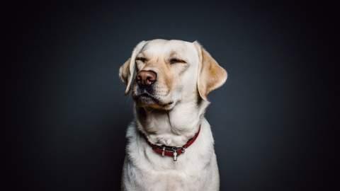 Top Dog Film Festival 2020
