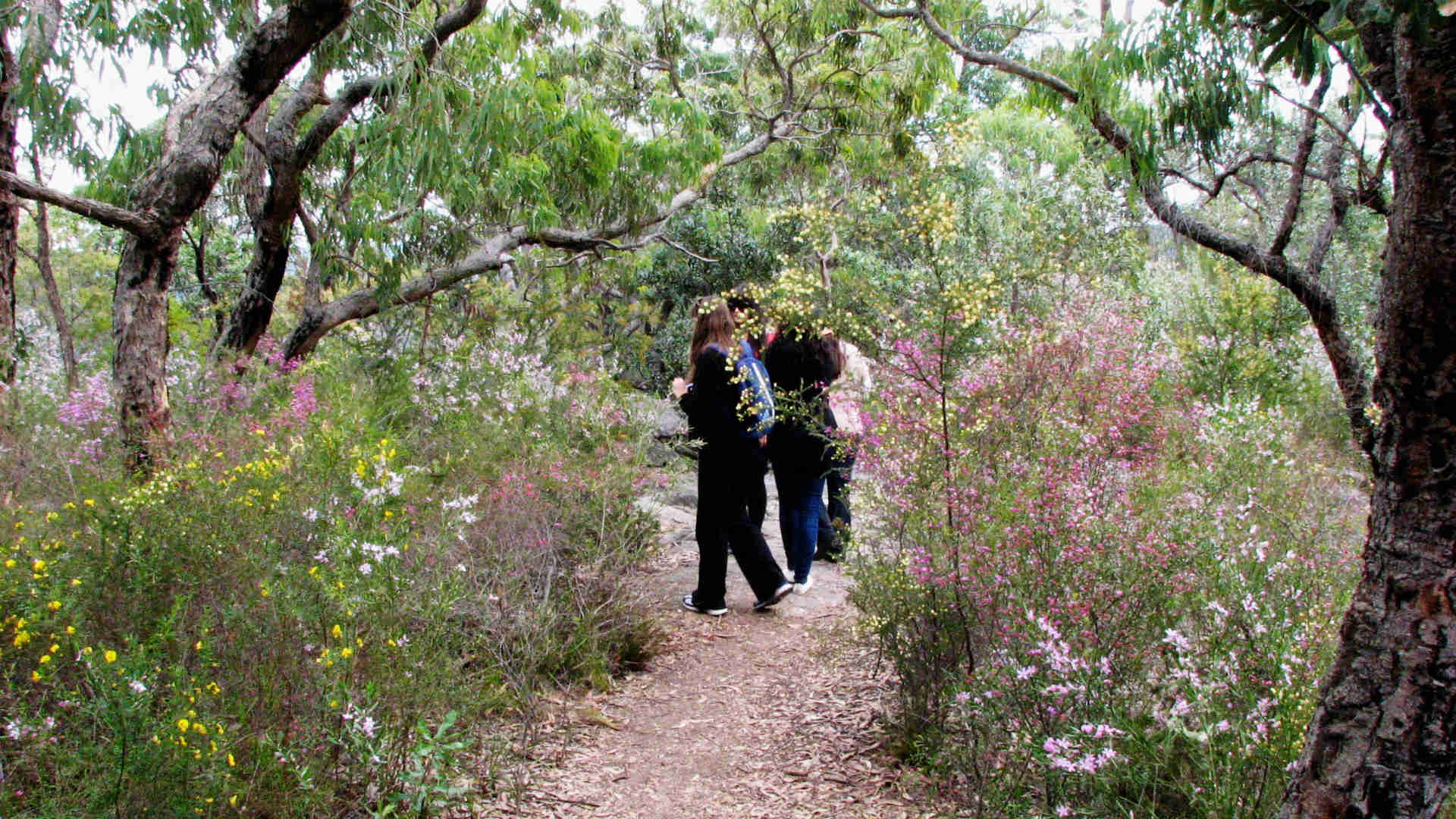 This Hidden Wildflower Garden Just Out of Sydney Opens Six Weekends a Year