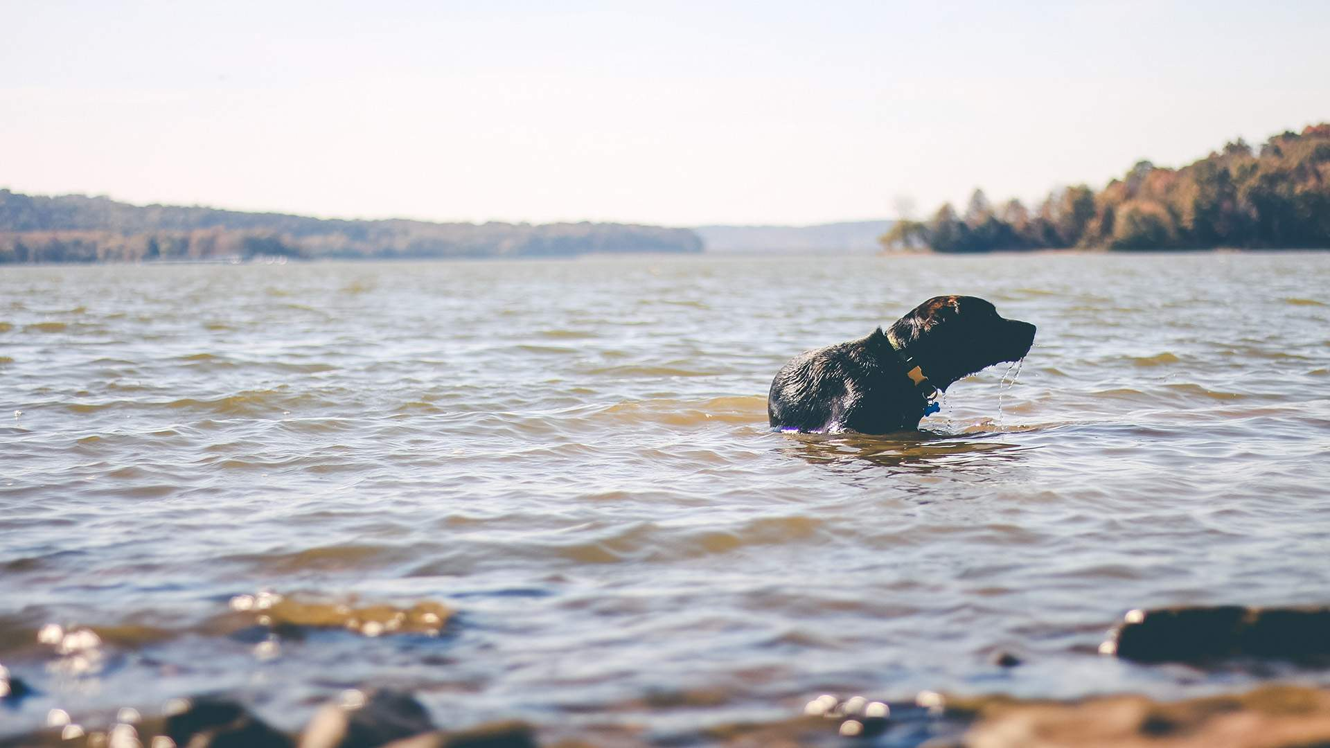 Nine Spots Where You Can Camp, Hike and Swim with Your Dog in New South Wales