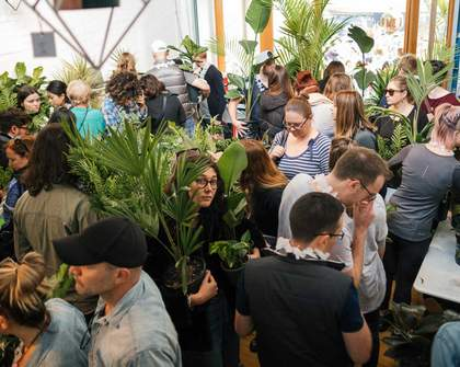 Jungle Hottest 100 Indoor Plant Sale