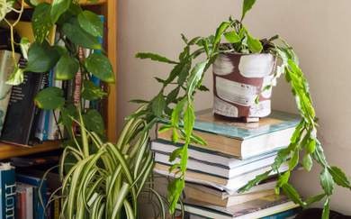 How to Choose the Best Plants For Your Home