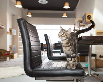 A Cat Adoption Cafe Has Landed in Wellington
