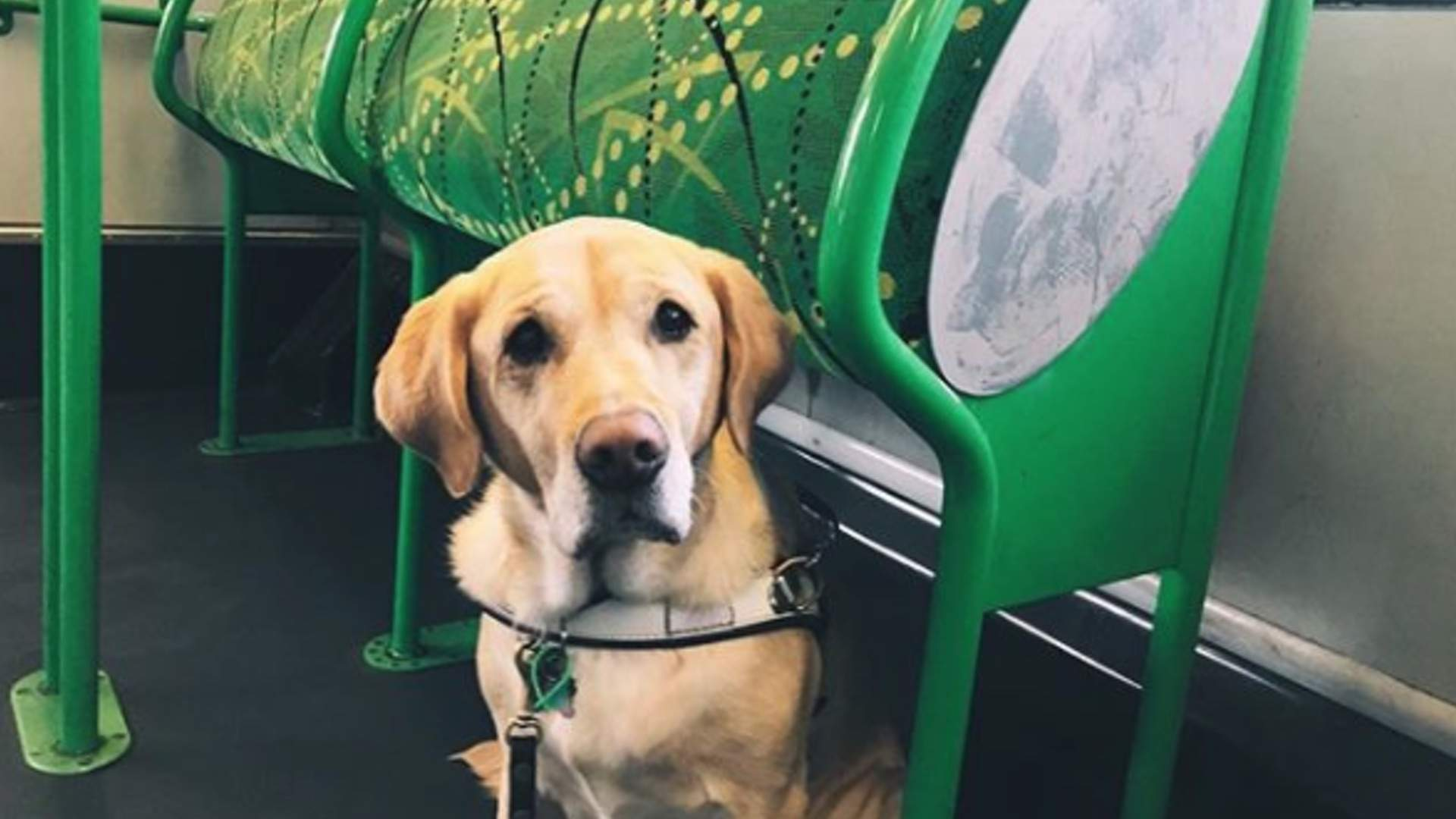 Guide Dog Tram Pat and Chat 2019