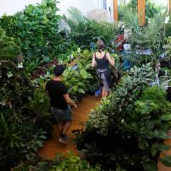 Jungle Collective 'Elephant Affair' Indoor Plant Sale