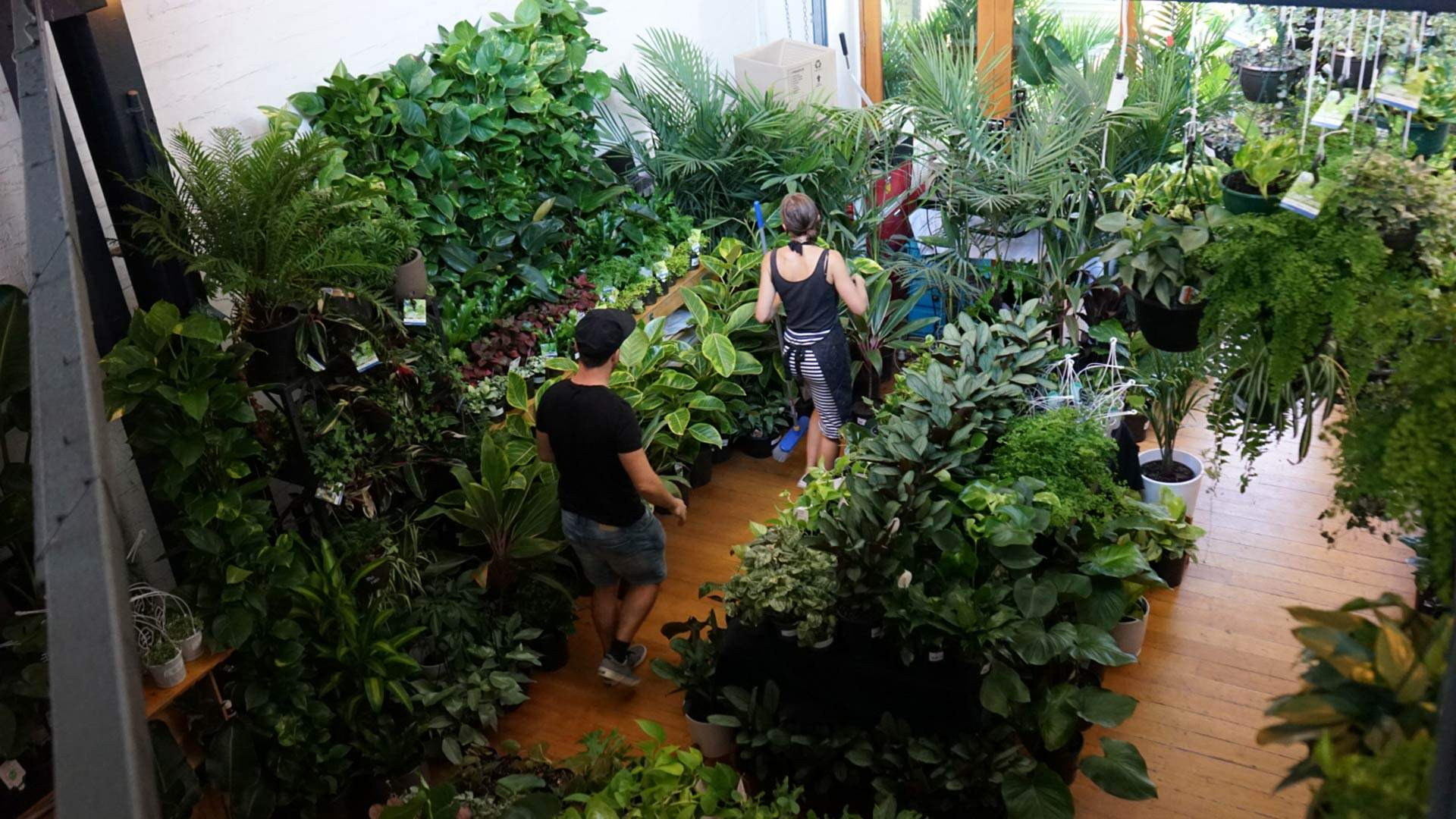 Jungle Collective Indoor Plant Warehouse Sale: Pet-Friendly Focus