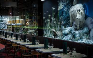 Natural History Is Melbourne's New Museum-Inspired All-Day Bar, Grill and Cafe