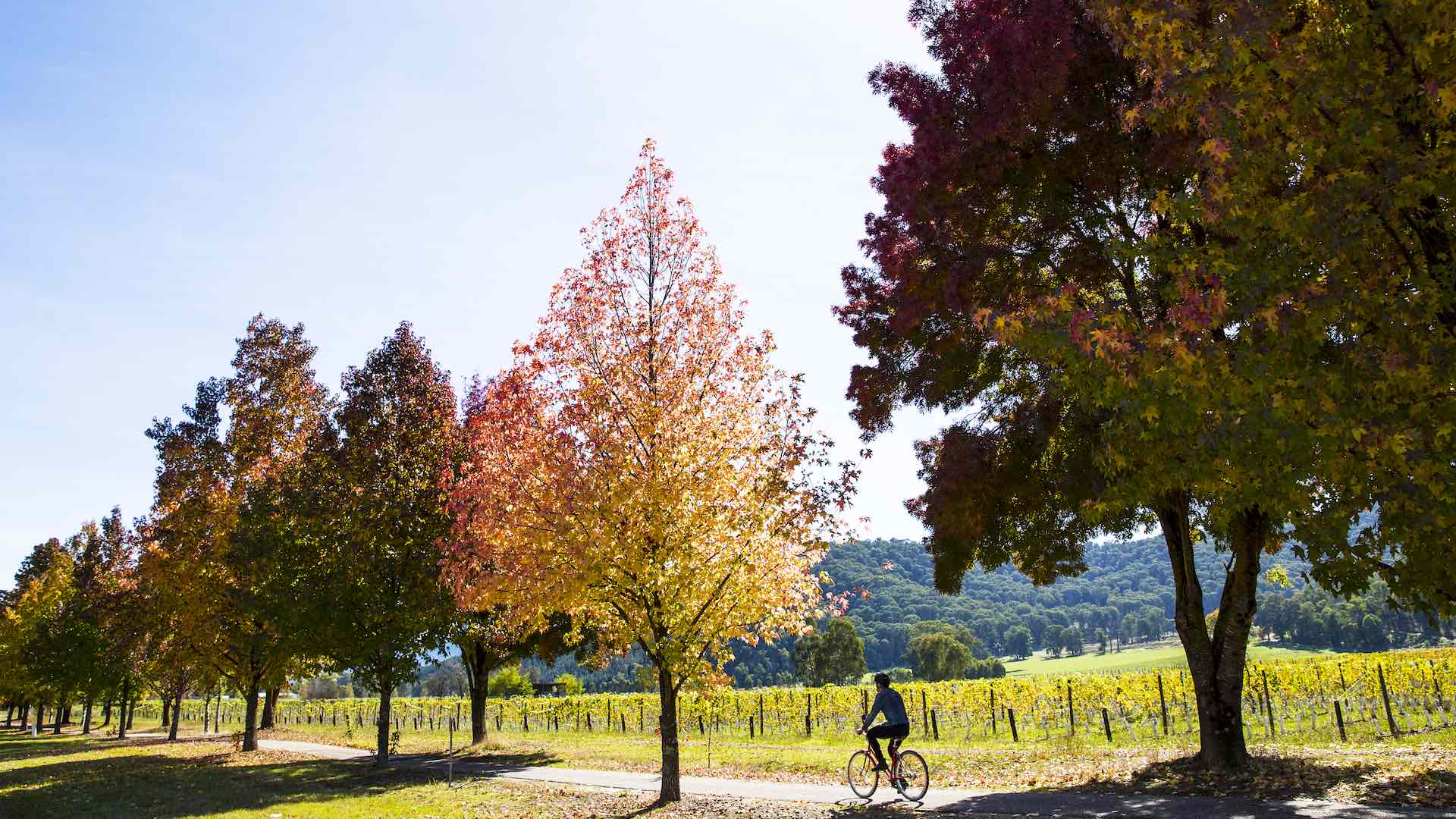 High Country Rail Trail around Feathertop Wines