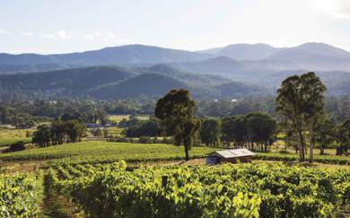 Prosecco Road: The Ultimate Autumn Vineyard Hop