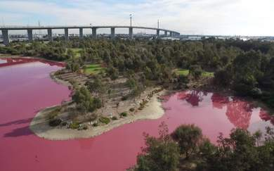 Melbourne's Westgate Park Lake Has Turned a Candy-Coloured Pink Again