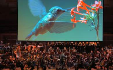 A Concert Series Pairing National Geographic Footage with a Live Orchestra Is Touring Australia