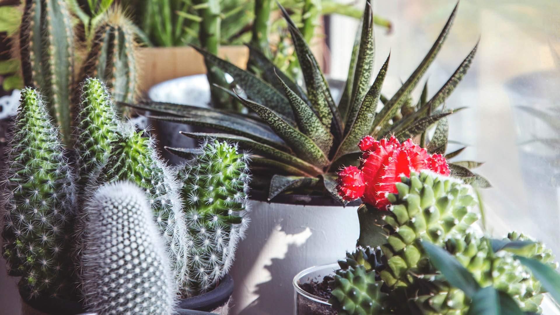 Botanical Extravaganza