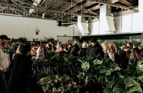 Huge Indoor Plant Warehouse Sale: Rare Plant Party