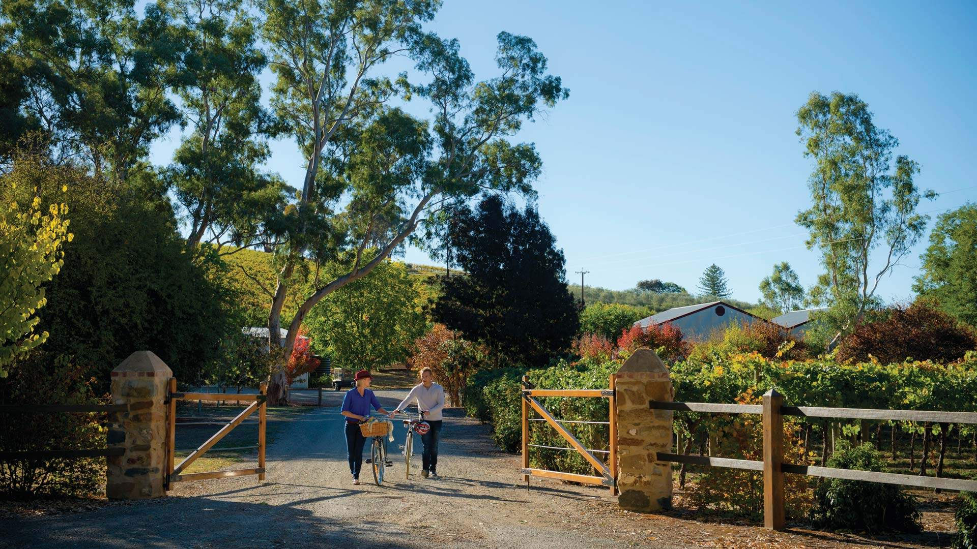 A Food and Wine Lover's Guide to the Clare Valley