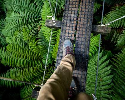 Google, Tourism and Ziplining Helped Save and Restore This Rotorua Native Forest