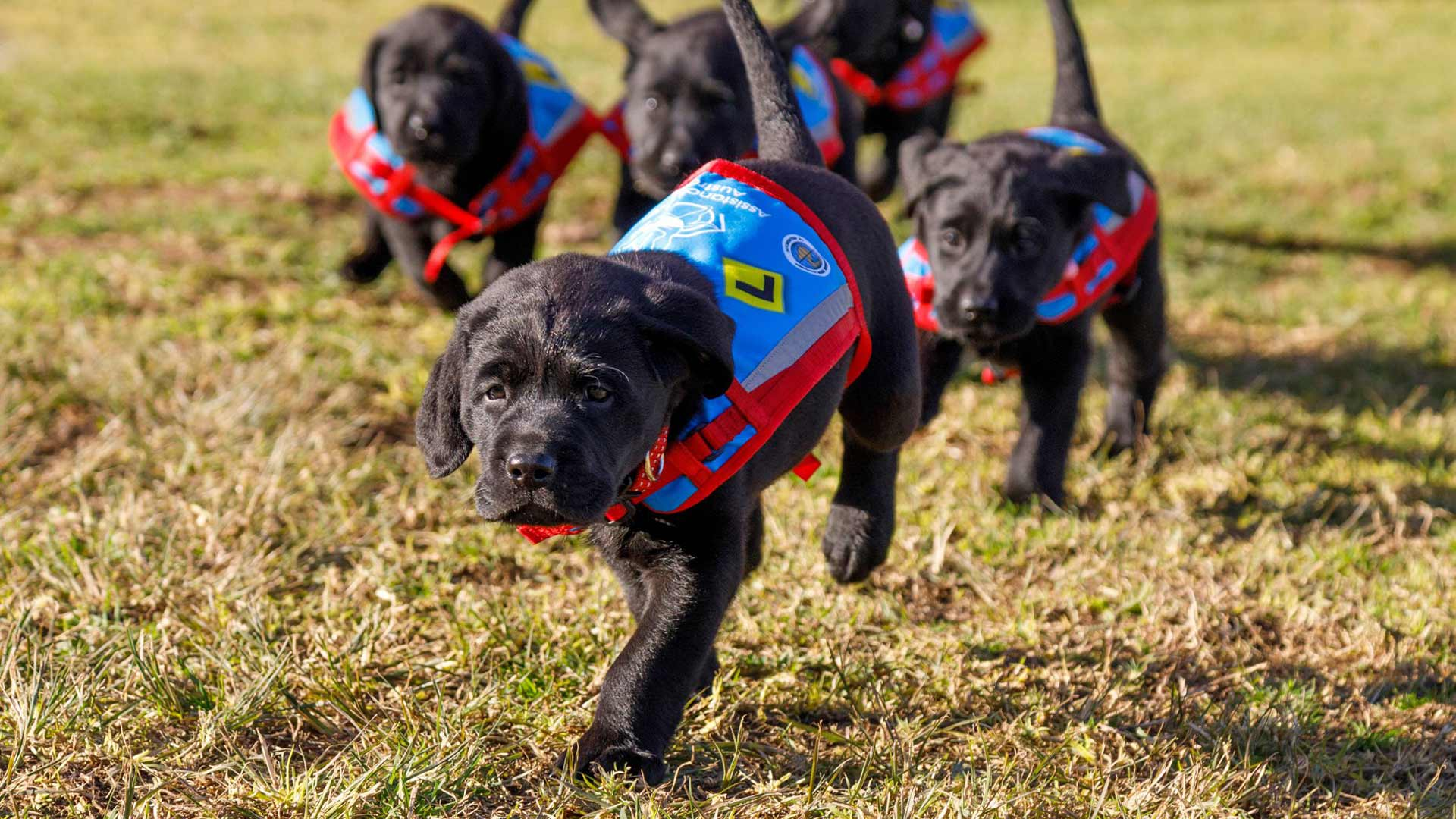 Sydney International Airport Now Has a Team of Very Good Dogs to Help Passengers De-Stress