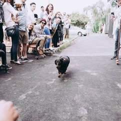 Chapel's Annual Oktoberfest Sausage Dog Race