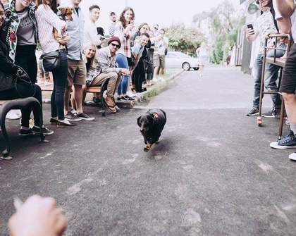 Chapel's Annual Oktoberfest Sausage Dog Race