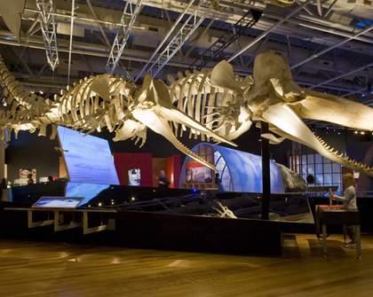 Whales | Tohora
