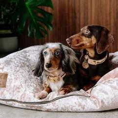 Ollie & Lloyd