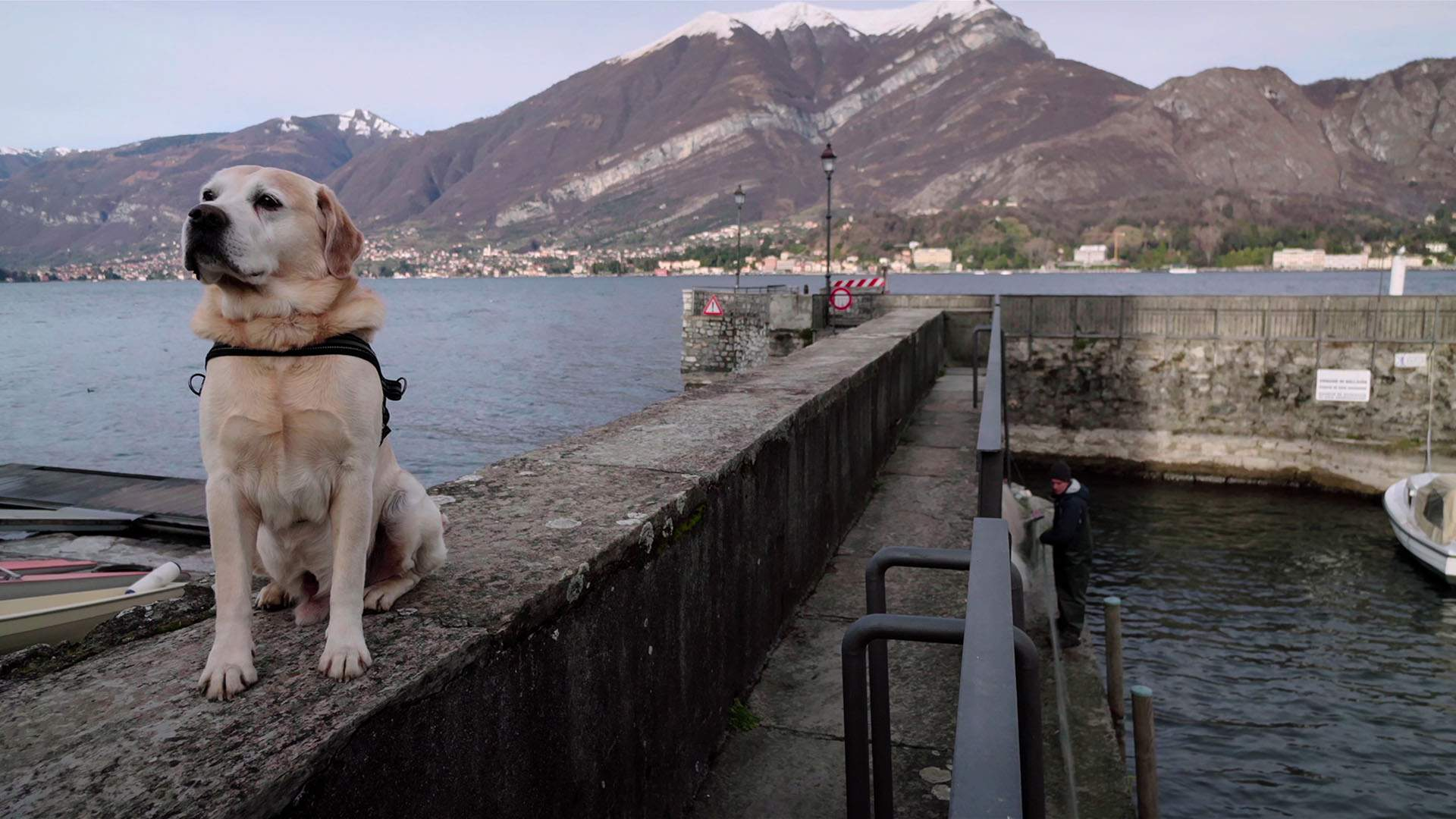 Netflix's Adorable 'Dogs' Docuseries Has Your Heartwarming Holiday Binge Session Sorted