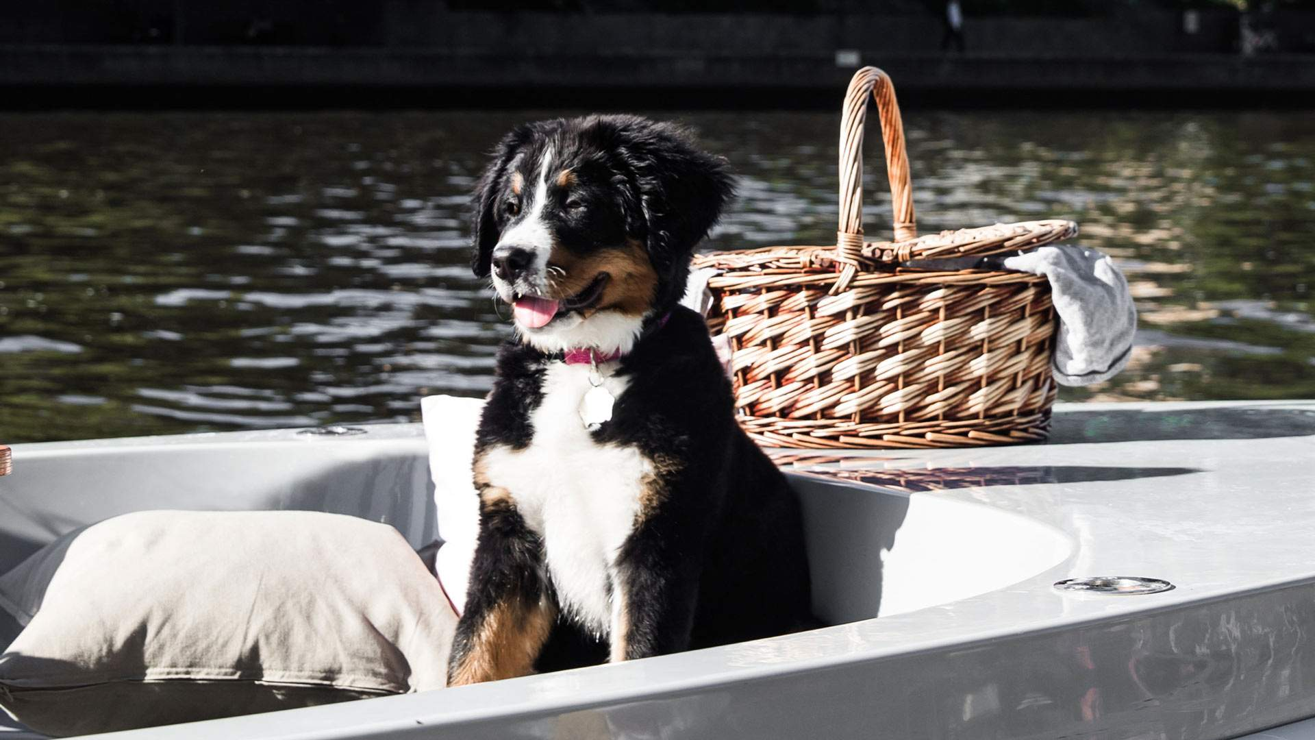 Melbourne's Pet-Friendly BYO Picnic Boats Are Now Setting Sail From the CBD