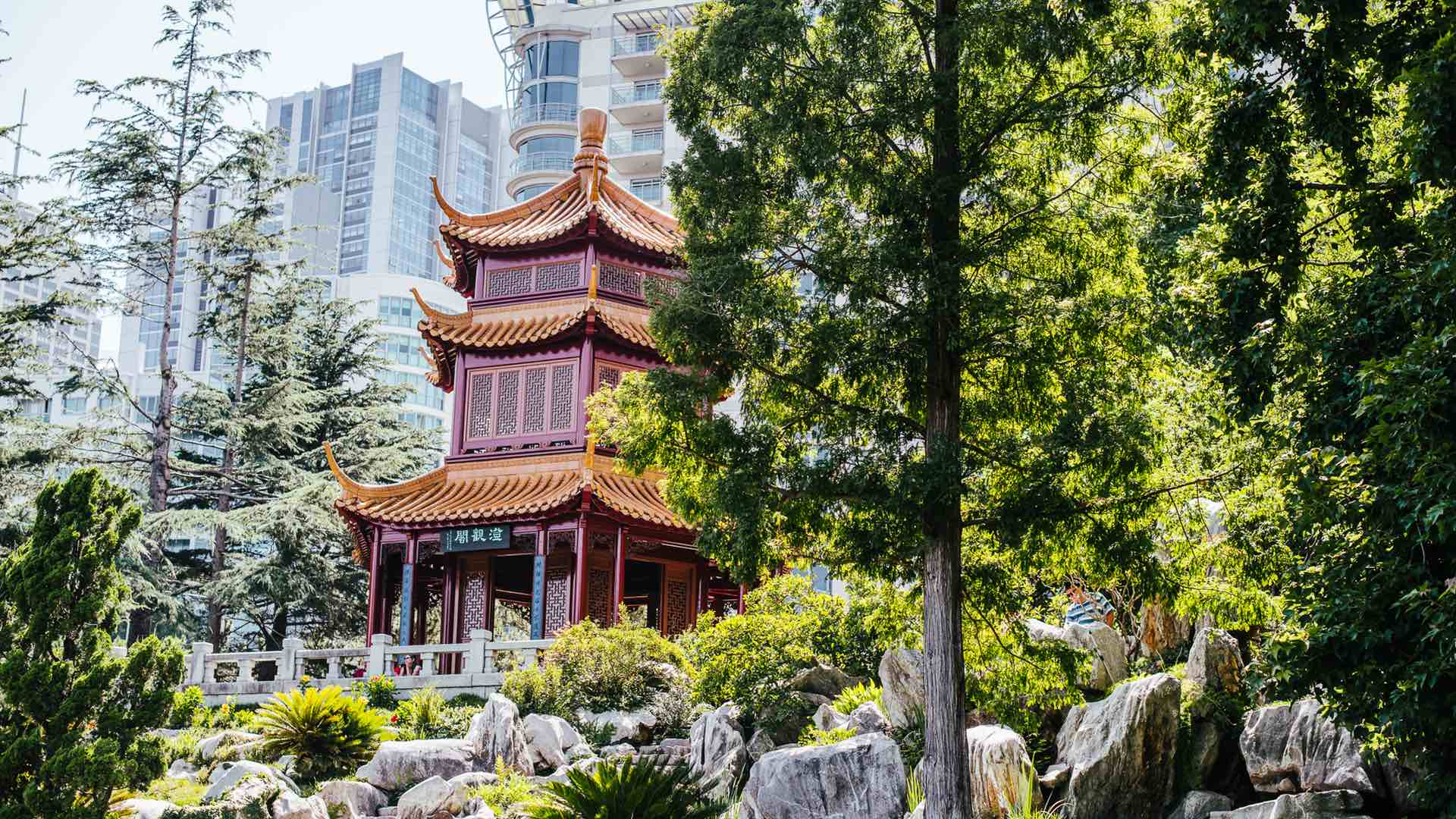 The Teahouse in Sydney's Tranquil Chinese Garden of Friendship Has Been Taken Over by Lotus