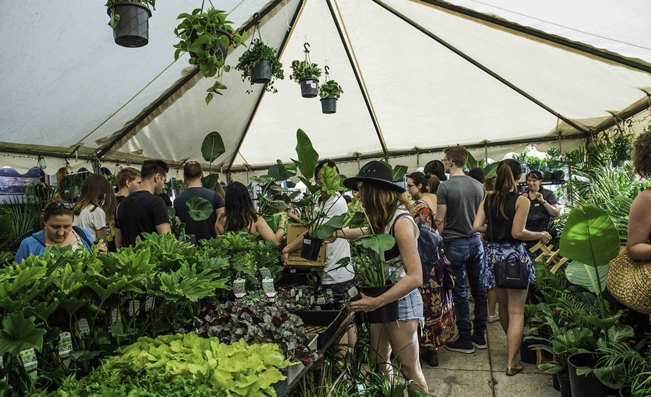 Jungle Collective Indoor Plant Warehouse Sale