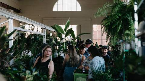 Jungle Collective 'Jungle Plant Party' Indoor Plant Warehouse Sale