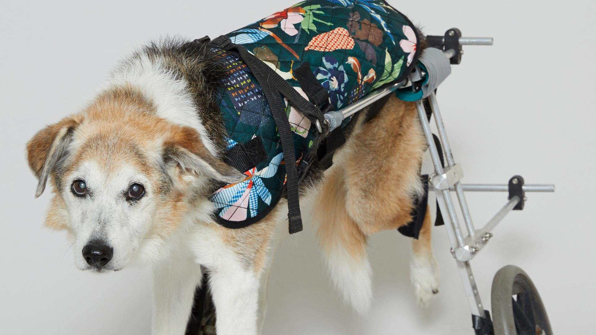 Gorman Has Just Dropped a New Line of Coats for (Very Good) Dogs