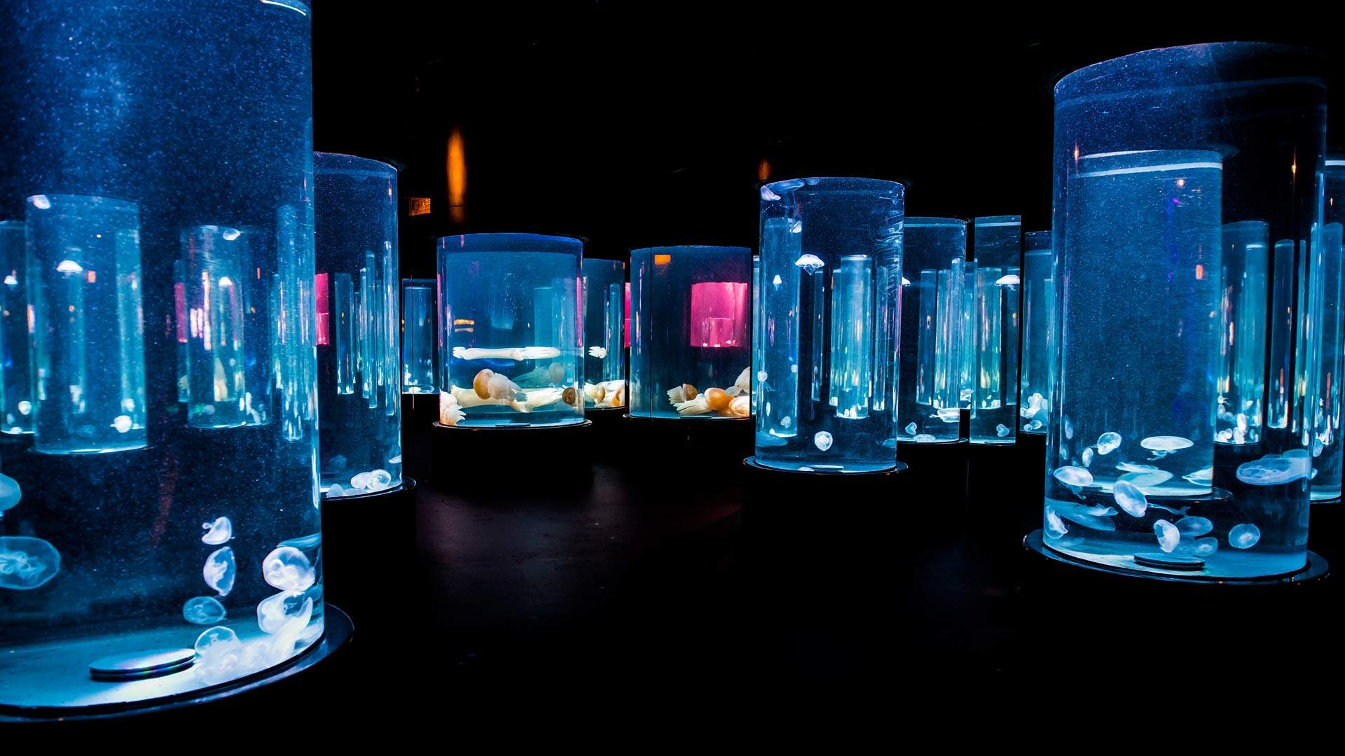Discover the Wonderful World of Jellyfish